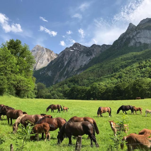 Paisaje de montaña con caballos