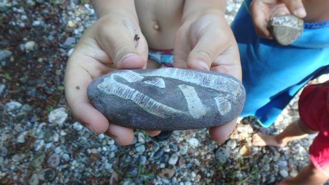 Trouvés dans le gave d'Aspe, de curieux galets à fossiles de crinoïdes (Pyrénées béarnaises)