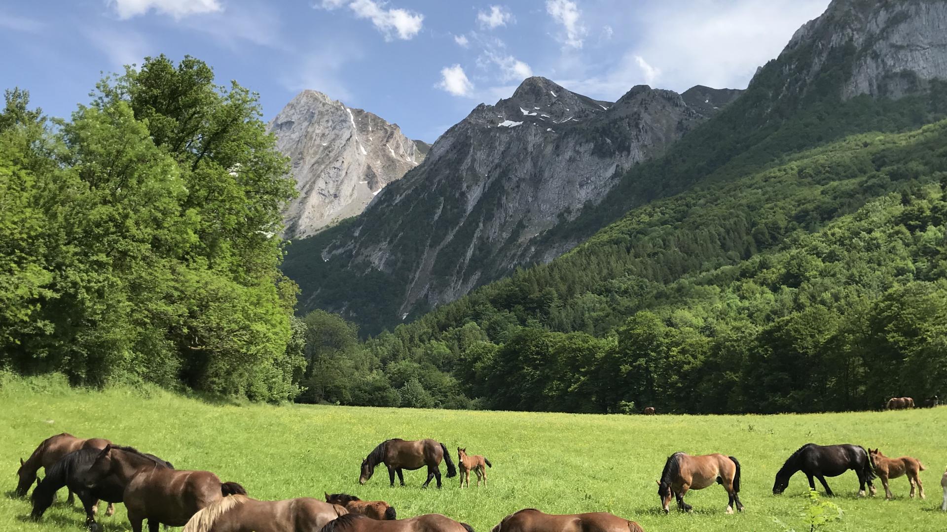 Prairie du vallon d'Aoulet à Accous - vallée d'Aspe (Pyrénées béarnaises)
