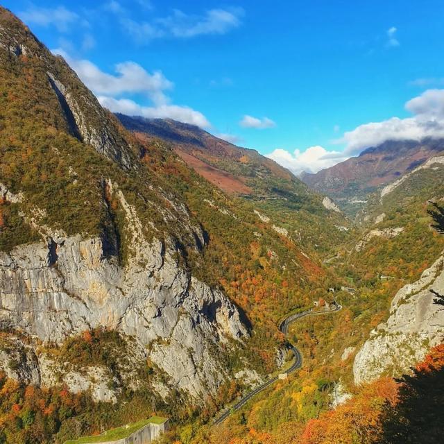 Instagram #pyreneesbearnaises