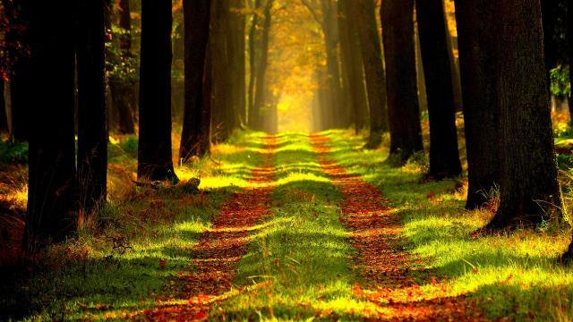 forest-868715-1920.jpg
