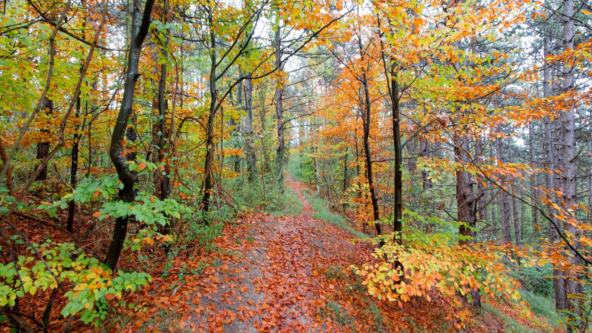 Forêt De Retz (1)