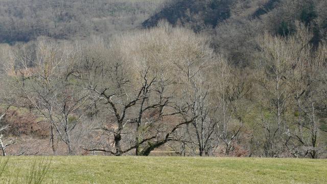 Vue sur un bois à Olemps