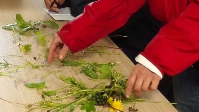 Atelier botanique avec Capucine & Marjolaine