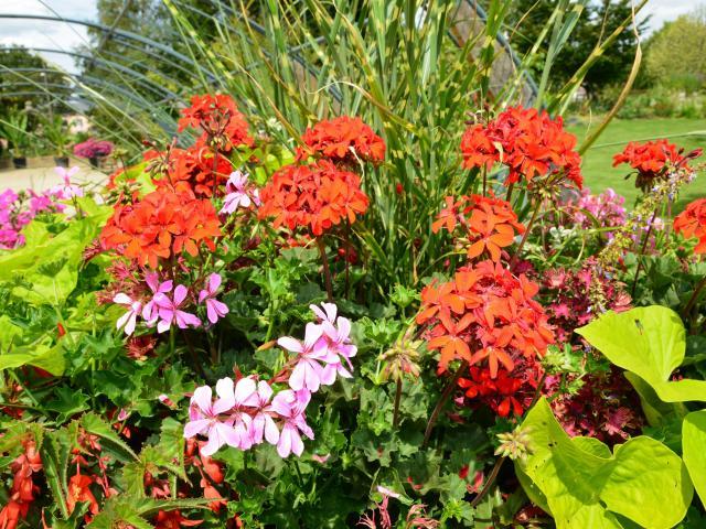jardin-des-plantes-christian-robert-ville-de-saint-nazaire1.jpg