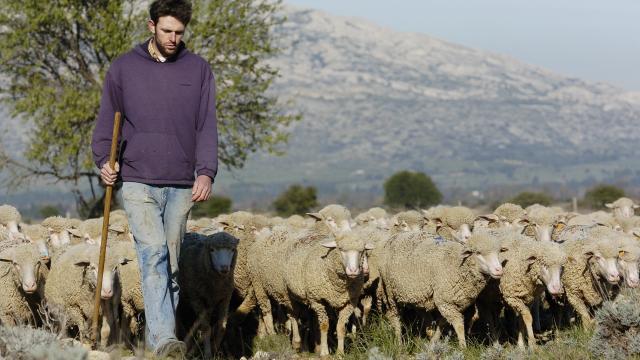 Domaine du merle, activite pastorale, berger et troupeau de mouton, brebis