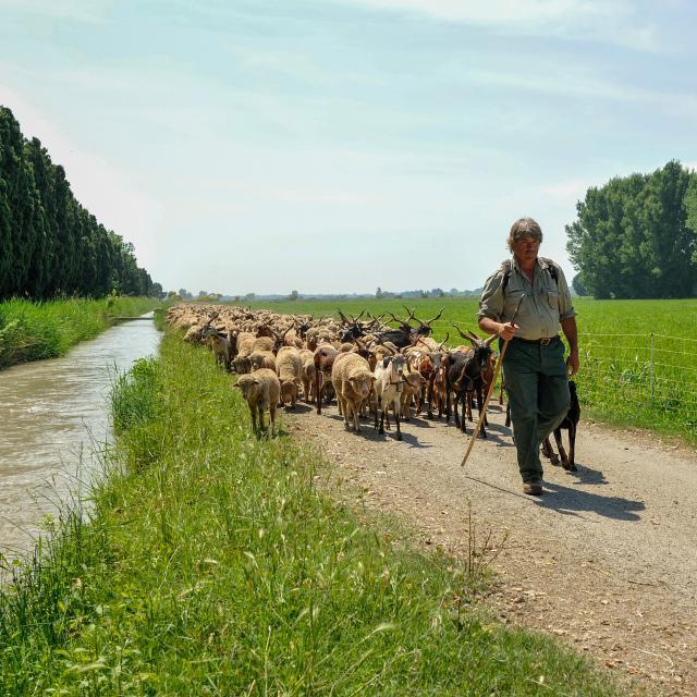 Regis Cintas Flores Pastoralisme (24)