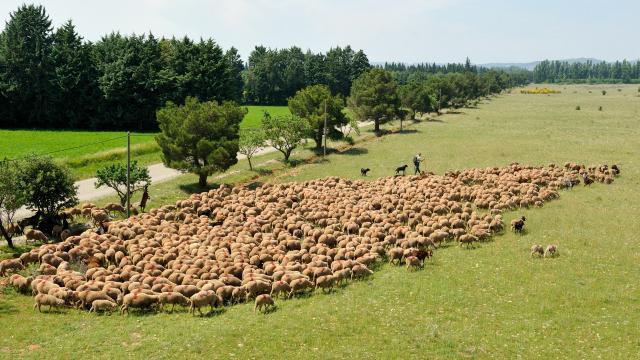 Regis Cintas Flores Pastoralisme (30) 0025
