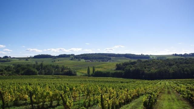 Vignoble de Bergerac