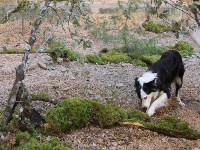 Journées du Terroir à Sarlat