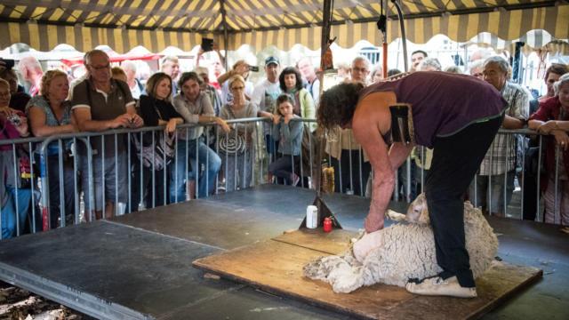 Démonstration de tonte d'agneau lors des journées du goût et de la gastronomie à Sarlat