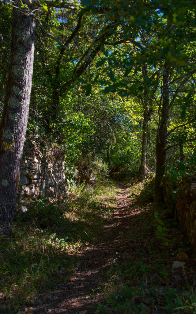 la forêt à Saint-Vincent-de-Cosse