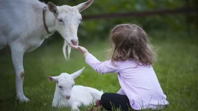 Enfant et animaux en Périgord Noir