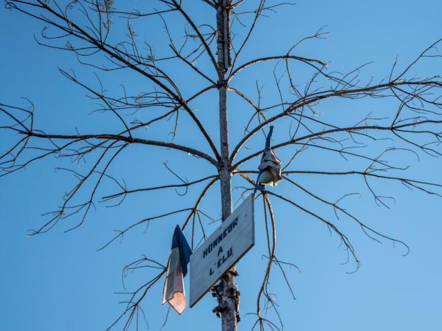 l'arbre de mai - coutume et traditions Sarlat Périgord