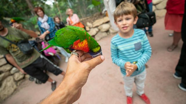 Loriquet au parc animalier Biotropica à Léry-Poses en Normandie
