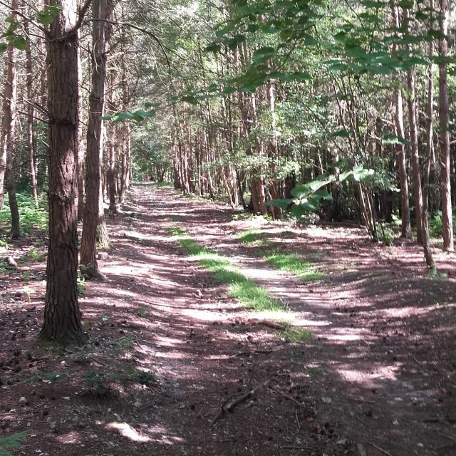 Chemin en forêt de Bord-Louviers