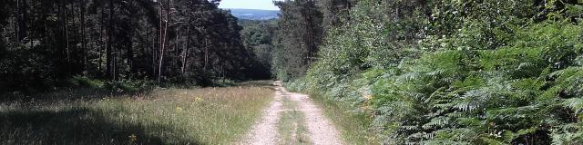 Route Forestière Des Damps 1