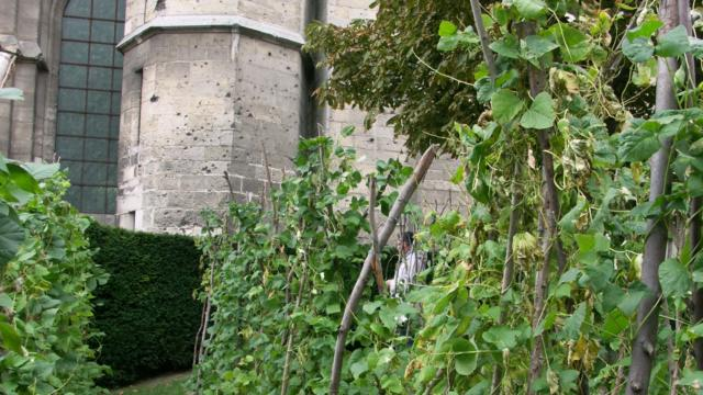 Plants de haricots de Soissons < Jardin du Haricot < Soissons