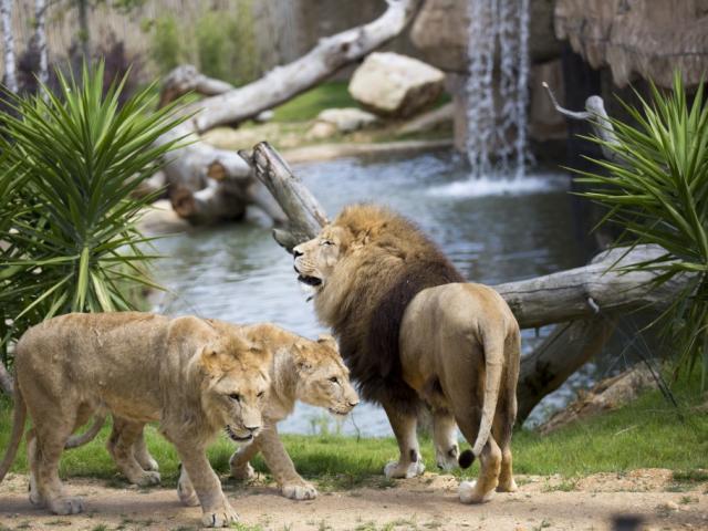 Zoo Beauval La Terre Des Lions Sud Val De Loire