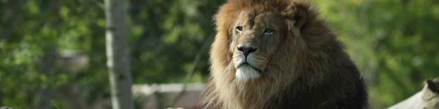 La Terre des Lions - Zoo de Beauval