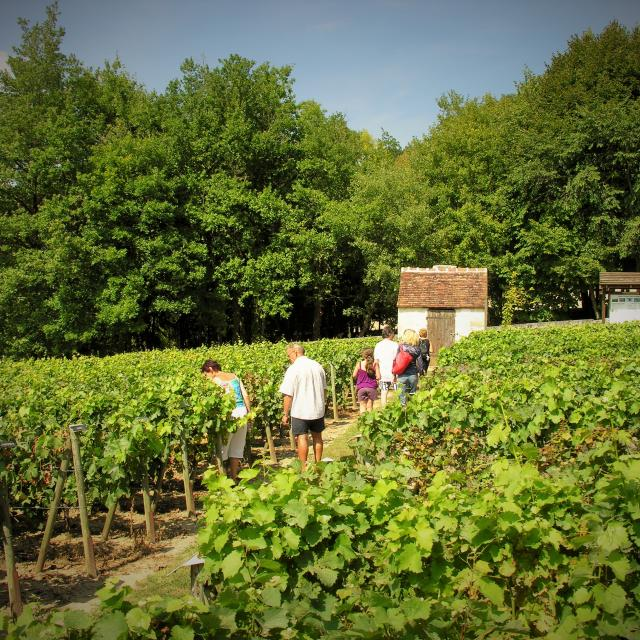 Loge Conservatoire de la vigne à Châteauvieux