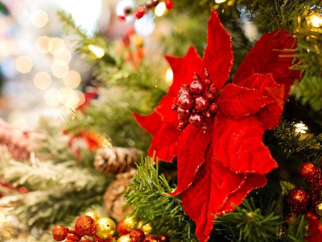 Vivez des moments magiques à Noël dans les Châteaux de la Loire