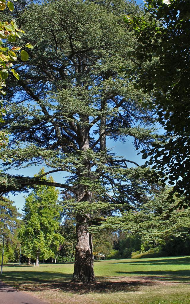 Parc Municipal du Vaulx St-Georges