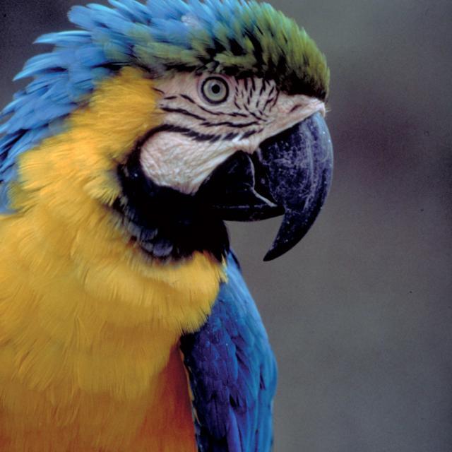Les Maîtres des Airs, spectacle au ZooParc de Beauval, perroquets