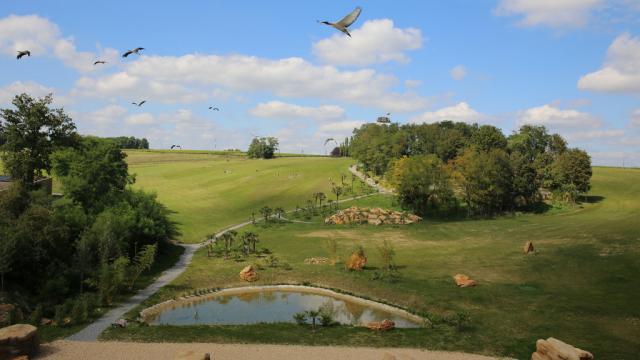 Les Maîtres des Airs, spectacle au ZooParc de Beauval