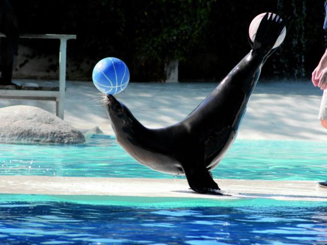 Spectacle Otaries Zooparc De Beauval Conseils Visite Plan
