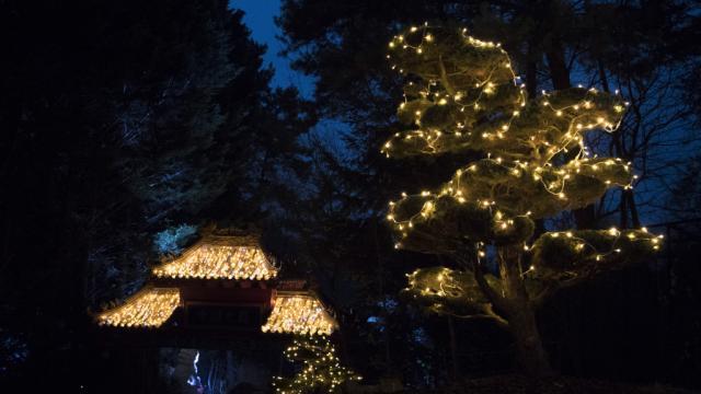 Zoo Beauval Illumination Noel Zone Chine