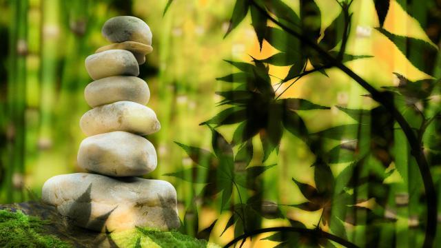 Clientele Zen&nature Bandeau
