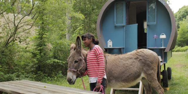Randonnée avec des ânes en forêt en Sud Val de Loire