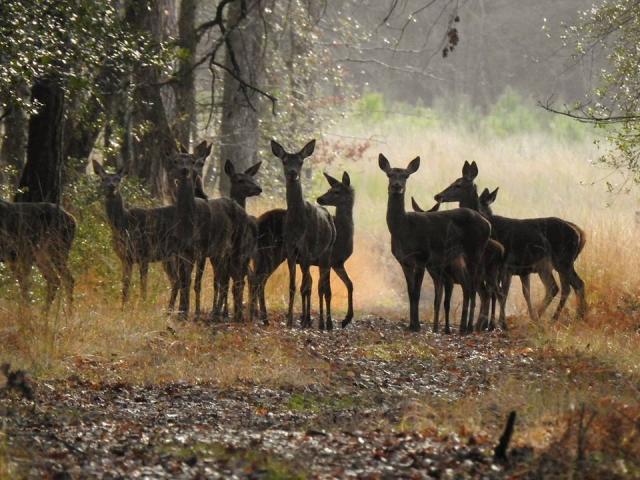 Domaine De La Mechiniere Mareuil Biche Gibier Nature