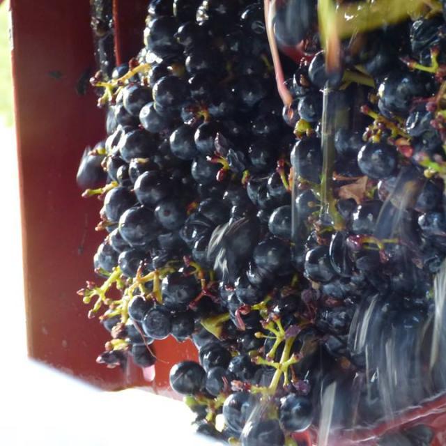 Domaine De La Mechiniere Mareuil Raisin Vin De Touraine