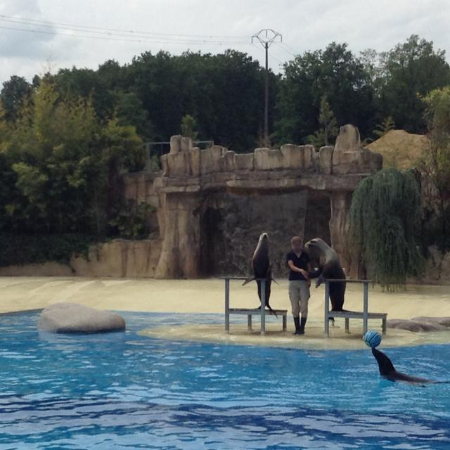 Experience Zoo Beauval Famille Spectacle