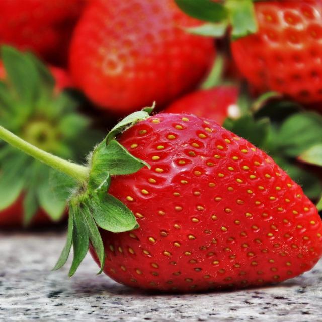 fraise-de-sologne-terroir-sud-val-de-loire-6.jpg