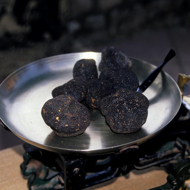 Gastronomie spécialité culinaire or noir truffe du Quercy