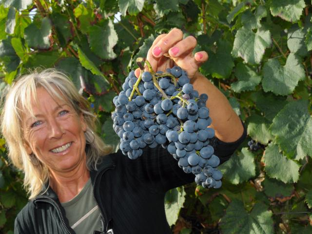 Vignoble du Brulhois