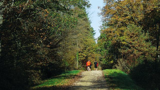 balade foret forêt d'Agre Montech