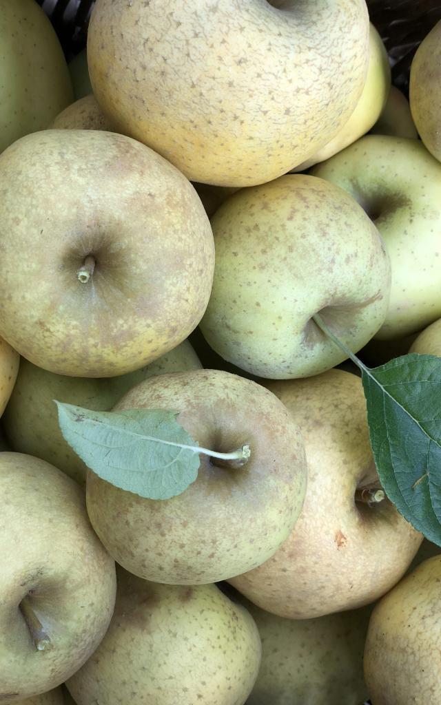 Pommes Chantecler Adt 82