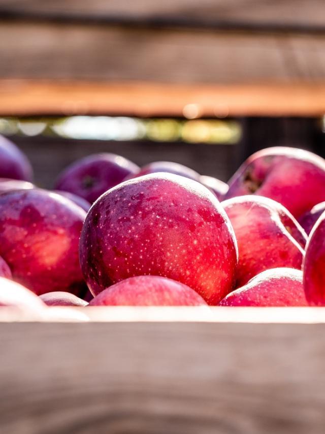 Pommes Lez Broz