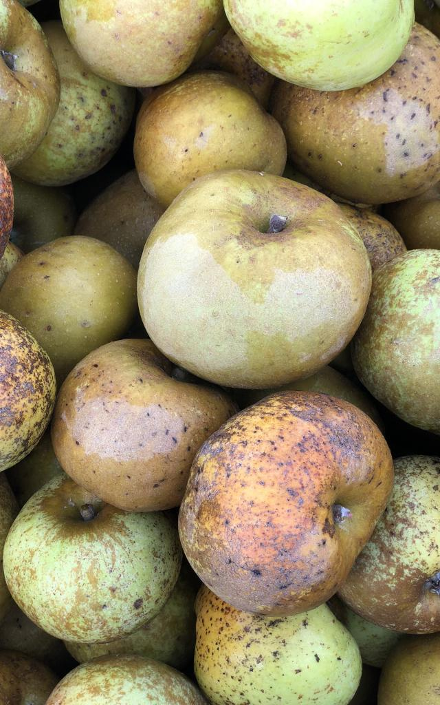 Pommes Reinettes Adt 82