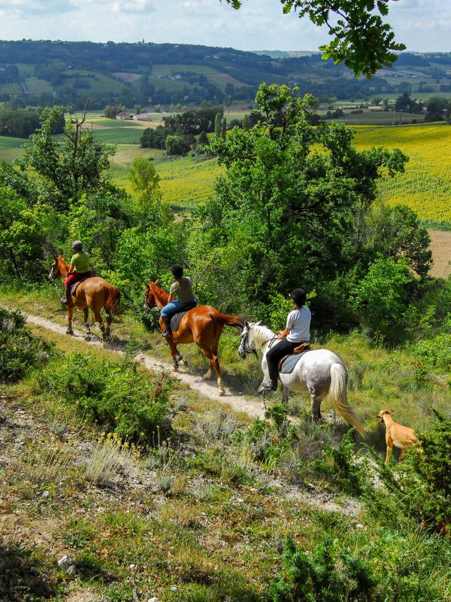 Balade à cheval et randonnées équestres en Tarn-et-Garonne