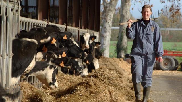 Ferme Du Ramier Vaches