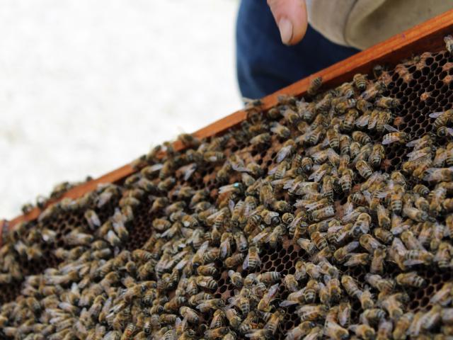 La Reine De La Ruche Bee Au Top
