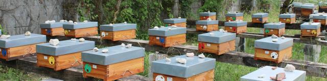 Pepinieres Bee Au Top