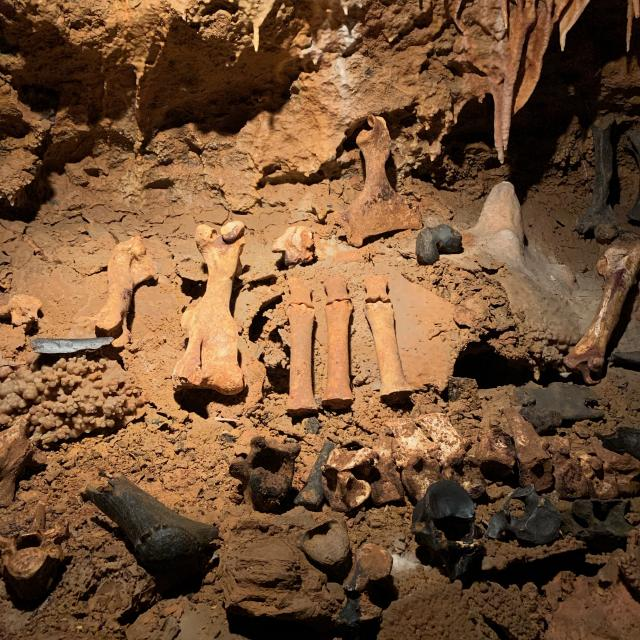 Ossements dans la grotte du bosc à saint-antonin-noble-val