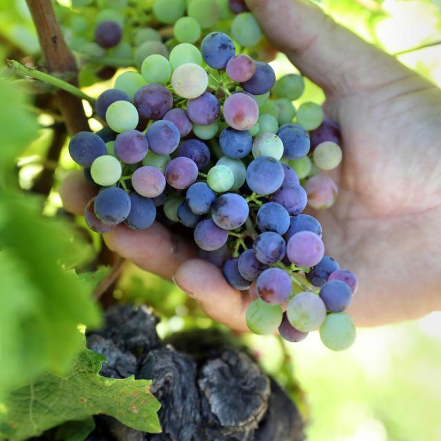 Des appellations variées pour des vins exceptionnels