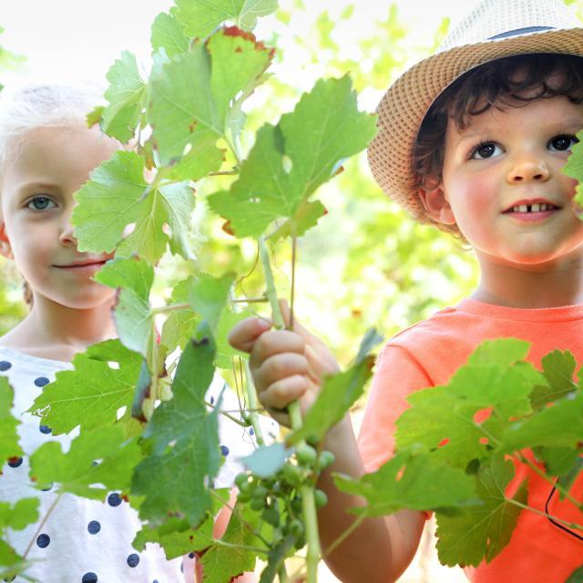 Activités famille au milieu des vignes